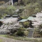 清流の湯 桜