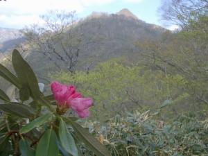 登山道からの稲包山